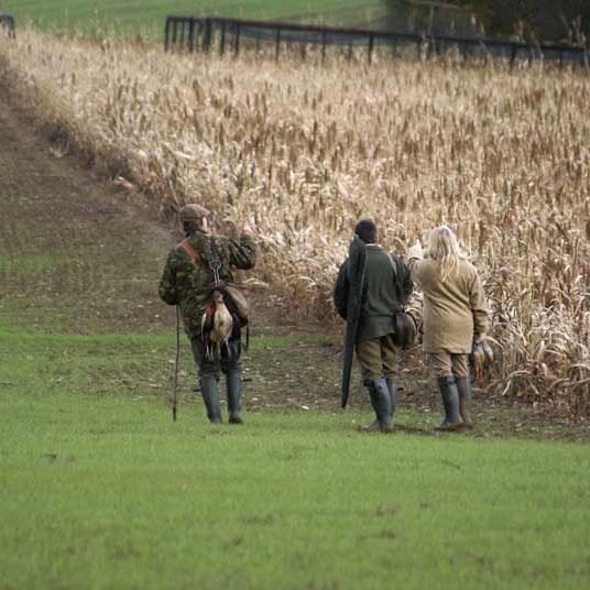 Game Shooting at Brook Farm Cuffley